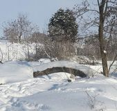 Sneeuwbrug Royalty-vrije Stock Foto's