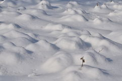 Sneeuwbuilen Stock Fotografie