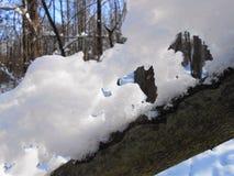 Sneeuwcijfer aangaande de boomstam royalty-vrije stock foto