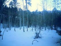 Sneeuwdag Stock Foto's