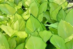 Sneeuwdaling de groene hoek Royalty-vrije Stock Foto