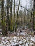 Sneeuwdaling op het water stock foto's