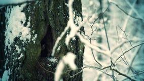 Sneeuwdalingen op achtergrond van boom in bos stock video