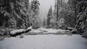 Sneeuwdalingen op Bevroren Kreek en Lagere Yosemite-Dalingen stock videobeelden