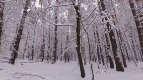 Sneeuwdalingen van een Tak, de Winterbos stock videobeelden