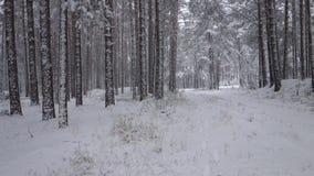 Sneeuwdalingen van het de winterbos stock footage
