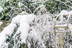 Sneeuwdeken op Struiken royalty-vrije stock foto