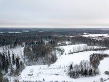 sneeuwdiebomen in bos hierboven wordt gezien van royalty-vrije stock afbeelding