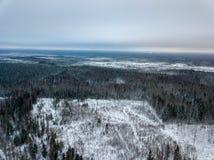 sneeuwdiebomen in bos hierboven wordt gezien van stock foto