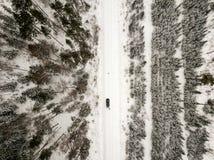 sneeuwdiebomen in bos hierboven wordt gezien van royalty-vrije stock foto's