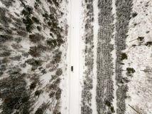 sneeuwdiebomen in bos hierboven wordt gezien van royalty-vrije stock foto