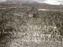 sneeuwdiebomen in bos hierboven wordt gezien van stock foto's