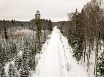 sneeuwdiebomen in bos hierboven wordt gezien van stock fotografie
