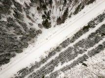 sneeuwdiebomen in bos hierboven wordt gezien van stock afbeelding