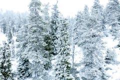 Sneeuwdielandschap met sparren met sneeuw worden behandeld royalty-vrije stock afbeeldingen
