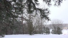 Sneeuwende sneeuw in het pijnboombos in koude de wintertijd 4K stock video
