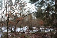 Sneeuwforest in fall Royalty-vrije Stock Foto