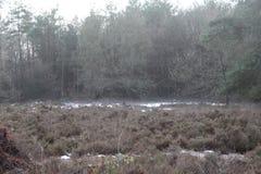 Sneeuwforest in fall Royalty-vrije Stock Foto's