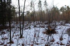 Sneeuwforest in fall Royalty-vrije Stock Afbeelding