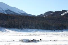 Sneeuwgebied Royalty-vrije Stock Afbeelding