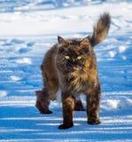 Sneeuwkat Royalty-vrije Stock Afbeelding
