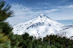 Sneeuwkegel van vulkaan en struikgewas van de altijdgroene Pinus struiken van Pumila royalty-vrije stock foto