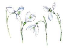 Sneeuwklokje Reeks van vier kleine witte bloemen Hand getrokken waterverfillustratie op een geweven document stock illustratie