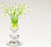 Sneeuwklokjebloemen Royalty-vrije Stock Foto's