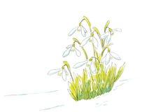 Sneeuwklokjes in de lenteilluastration Stock Foto