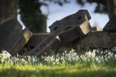 Sneeuwklokjes in de oude begraafplaats Royalty-vrije Stock Foto's