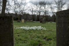 Sneeuwklokjes in een kerkhof Stock Foto's