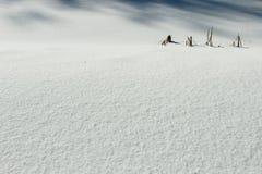 Sneeuwkorst, witte achtergrond Stock Foto