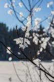 Sneeuwkristallen op boomtakken Stock Foto's