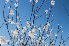Sneeuwkristallen op boomtakken Royalty-vrije Stock Fotografie