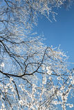 Sneeuwkristallen op boomtakken Stock Afbeelding