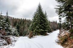 Sneeuwkruispunten in het midden van het de winterbos royalty-vrije stock afbeelding