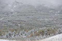 Sneeuwlandschap dichtbij Gletsjer Nationaal Park Stock Fotografie