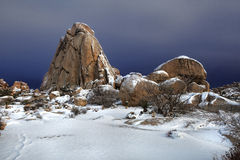 Sneeuwlandschap in Joshua Tree National Park Royalty-vrije Stock Fotografie