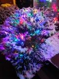 Sneeuwlichten op struik royalty-vrije stock foto