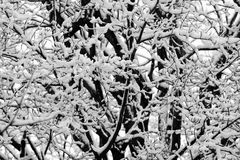 Sneeuwonweer Stock Afbeelding
