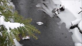 Sneeuwonweer, bomen, beek en ijs in sneeuw New Jersey NJ Maart 2017 stock footage