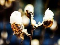Sneeuwparels Royalty-vrije Stock Afbeelding