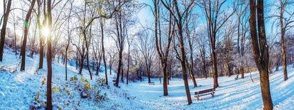Sneeuwpark met zon in de winter, Nitra, Slowakije stock foto