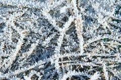 Sneeuwpatronen op installaties in de vroege winter stock afbeeldingen