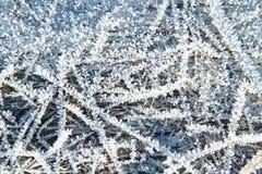 Sneeuwpatronen op installaties in de vroege winter stock foto