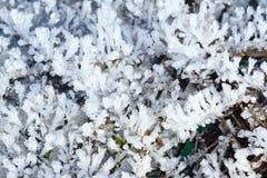 Sneeuwpatronen op installaties in de vroege winter stock foto's