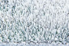 Sneeuwpatronen op installaties in de vroege winter royalty-vrije stock fotografie