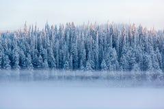 Sneeuwpijnboombomen met mist op een de winterlandschap stock afbeeldingen