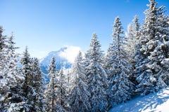 Sneeuwpijnboombomen op een de winterlandschap royalty-vrije stock fotografie