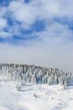 Sneeuwpijnboomboom Stock Foto